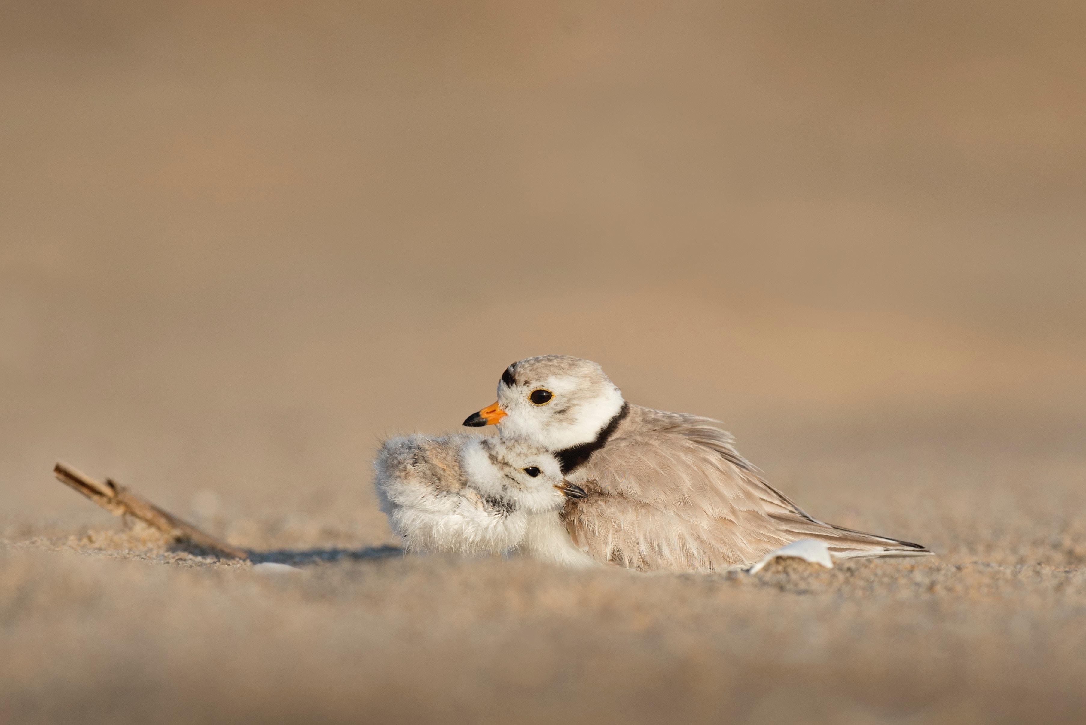 Mutter- & Babyvogel schmiegen sich aneinander